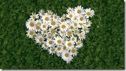 margaritas flores (20)