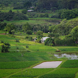 06-26-13 National Tropical Botantial Gardens - IMGP9438.JPG