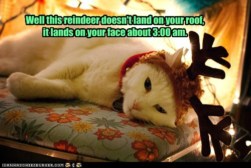 photo of a cat with reindeer antlers on its head