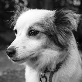 Watching by Nenad Borojevic Foto - Black & White Animals (  )
