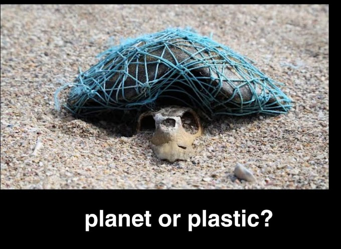 Let's explore world's plastic pollution and hope