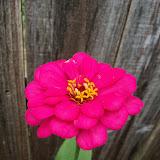 Gardening 2012 - 115_1993.JPG