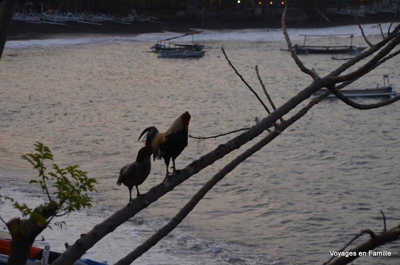 Strange birds in a tree, on a beach