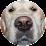 Pet365's profile photo