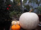 Variety of Pumpkins - Janet Mlinar