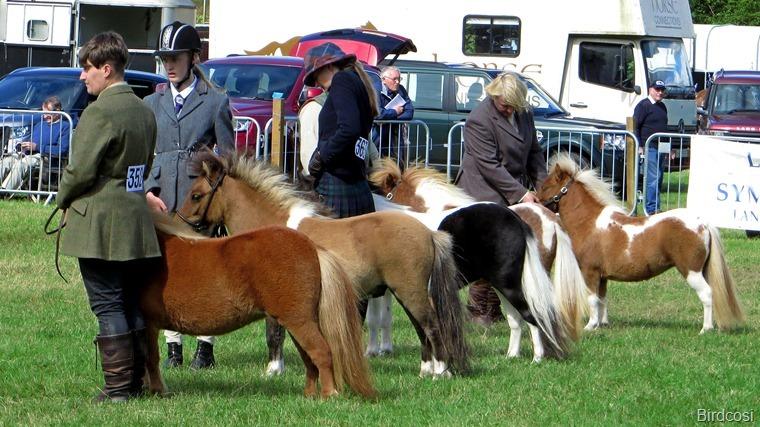 2016-08-13 Kinross Fair  0027
