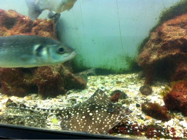 Aquarium Ostende