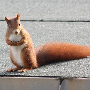 Eichhörnchen 4 (2).jpg