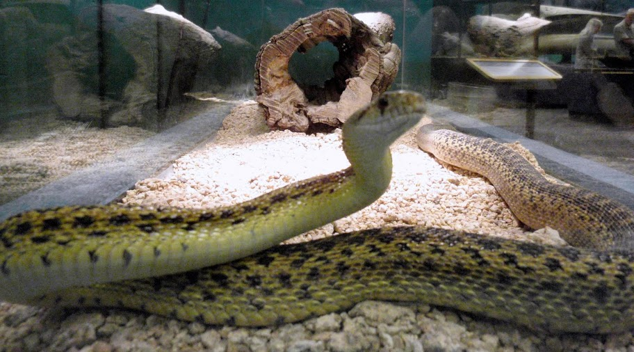 Snakes, I prefer them in cages.