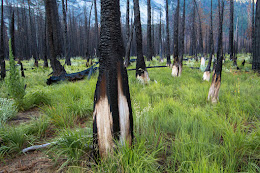 Burned out forest in Lost Valley