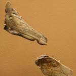 Musée d'archéologie nationale, Magdalénien : N° 12 et 13 : contour découpé en os figurant un cheval (moulage)
