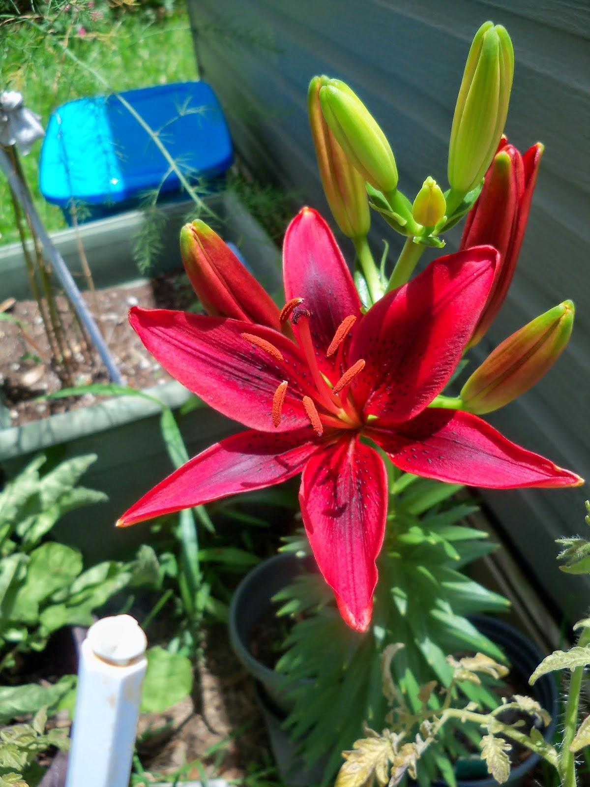 Gardening 2014 - 116_2969.JPG