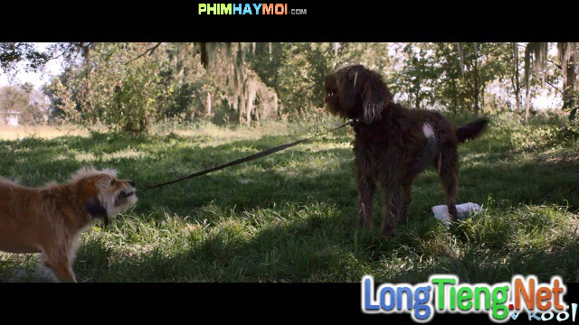 Xem Phim Chú Chó Benji - Benji - phimtm.com - Ảnh 2