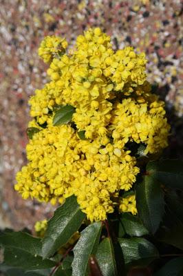 Moltitudine gialla di Spafufina