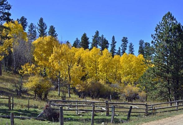 Fall Colors7