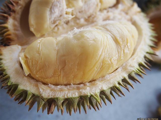 Durian kampung malaysia