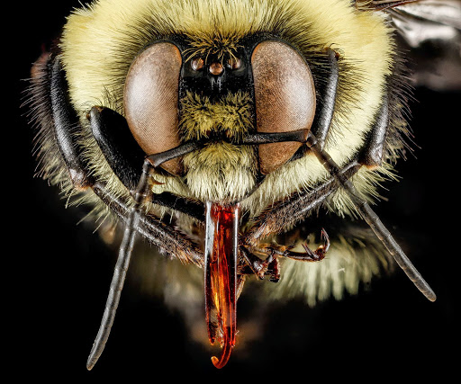 6-bumblebee-1600.jpg