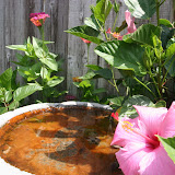 Gardening 2012 - IMG_3747.JPG