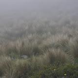 Paramo (4000 m). La Merced de Buenos Aires (Imbabura, Équateur), 25 novembre 2013. Photo : J.-M. Gayman