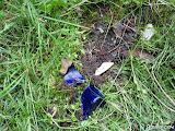 Some trash scatter amongst the grass.