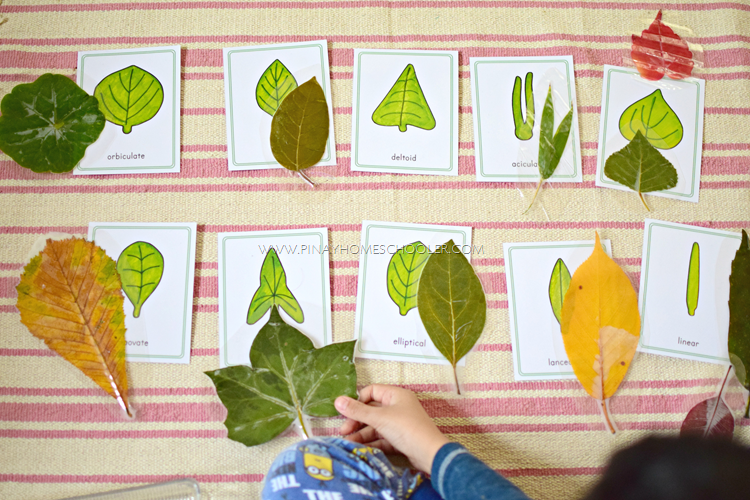 Montessori Inspired Leaf Shapes printable
