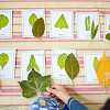 Our Leaf Shapes Study