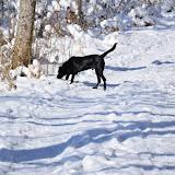 Beau Schneespaziergang 10.02.2013