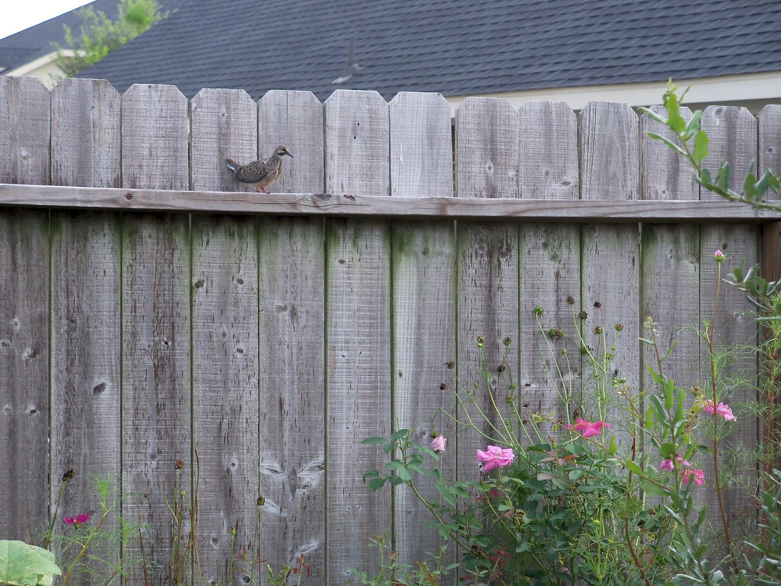 Gardening 2010, Part Three - 101_5152.JPG