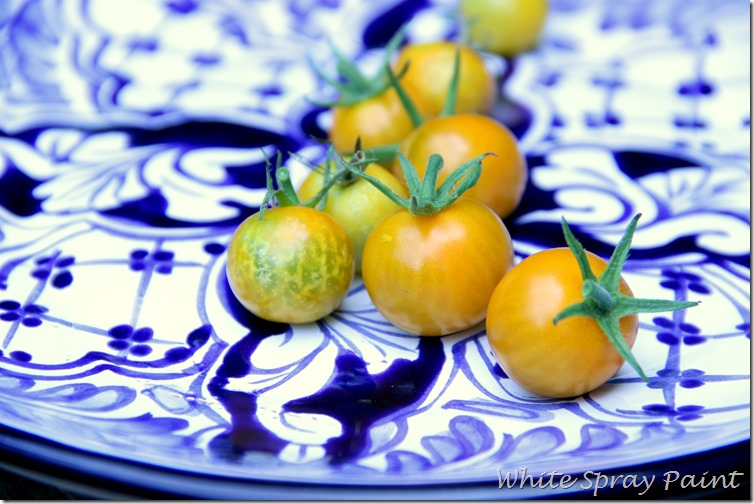 Sun Gold Cherry Tomatoes 2015