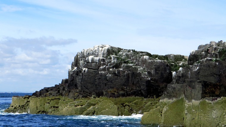 2016-08-10 Farne Islands 0179