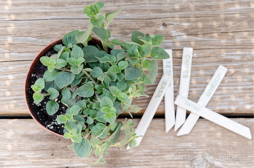 Sage plant with ceramic garden markers