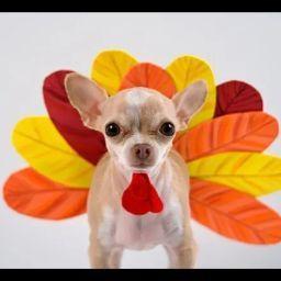 user Vera Potter apkdeer profile image