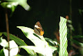 Butterfly | photo © Richard Chambers