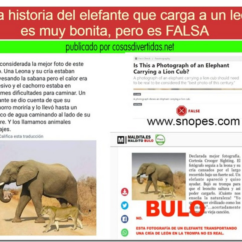 BULO El elefante que lleva a un cachorro de león moribundo