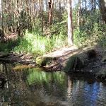 rocky creek (62531)