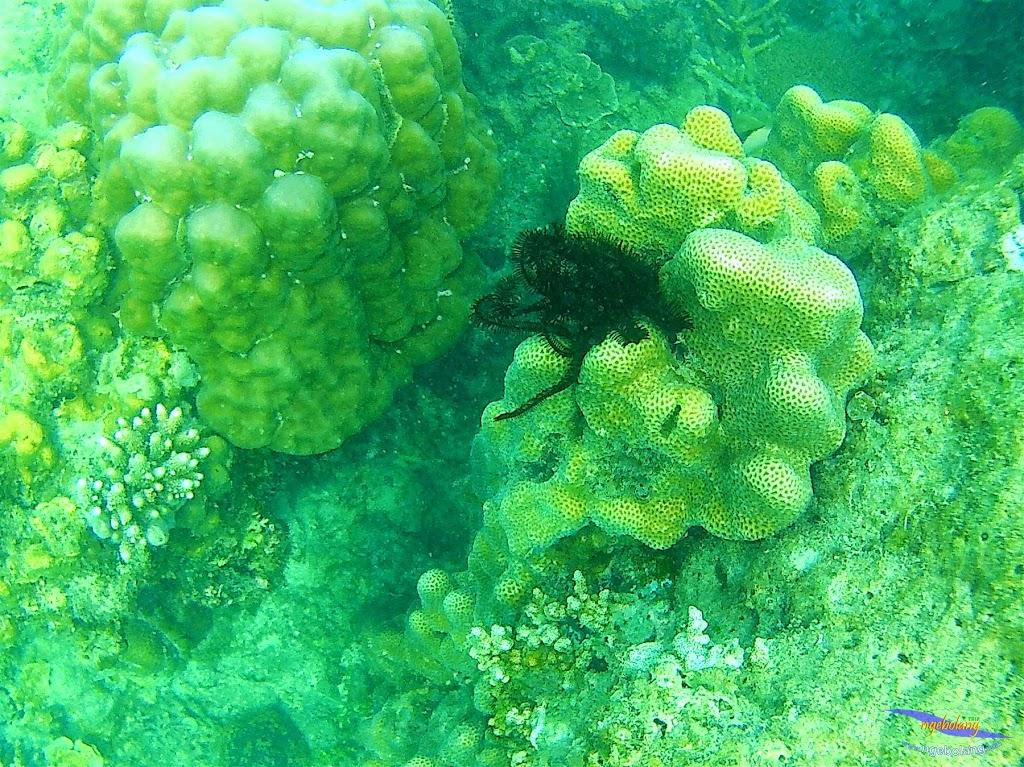 Pulau Harapan, 16-17 Mei 2015 GoPro  35