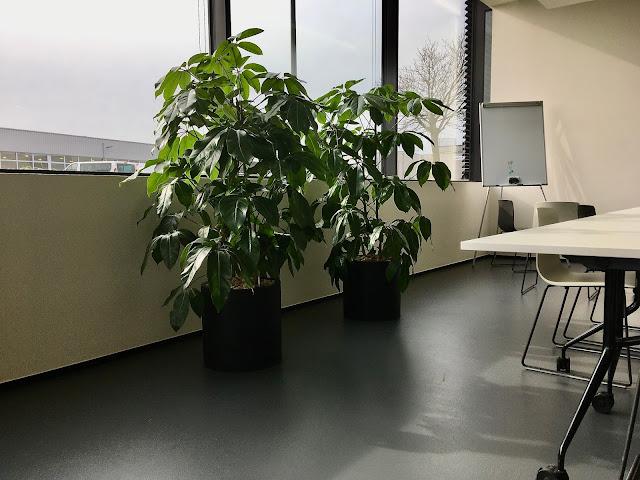 kamerplanten soorten die weinig onderhoud vragen en geen ziektes krijgen met bloemen en luchtzuiverend zijn