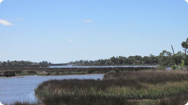 9 Wetlands (2)