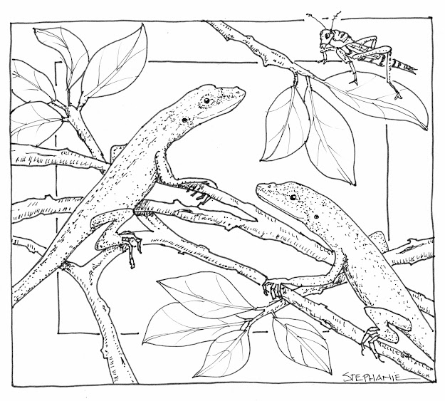 Hand Drawn Nature Coloring Pages