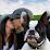 Pets Unite People's profile photo