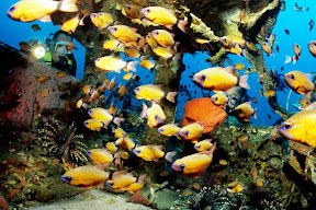 In stark contrast to the camouflage car parts are the iridescent colors of saltwater fish.