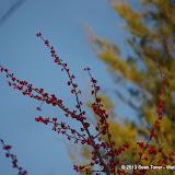 01-05-13 Arbor Hills Nature Preserve - IMGP3980.JPG