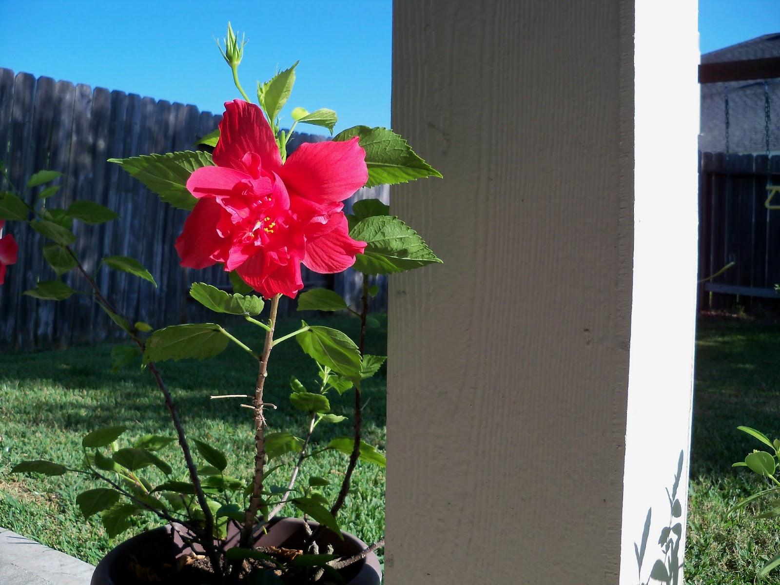 Gardening 2015 - 100_0511.JPG
