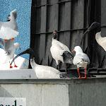 03. Birds picnic on garbage skip.jpg