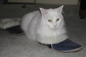 Monty in my slipper