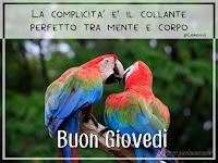 buon giovedi buongiorno immagine facebook amici amore pappagalli La complicità è il collante perfetto tra mente e corpo.jpg