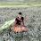 Dung Pham's profile photo
