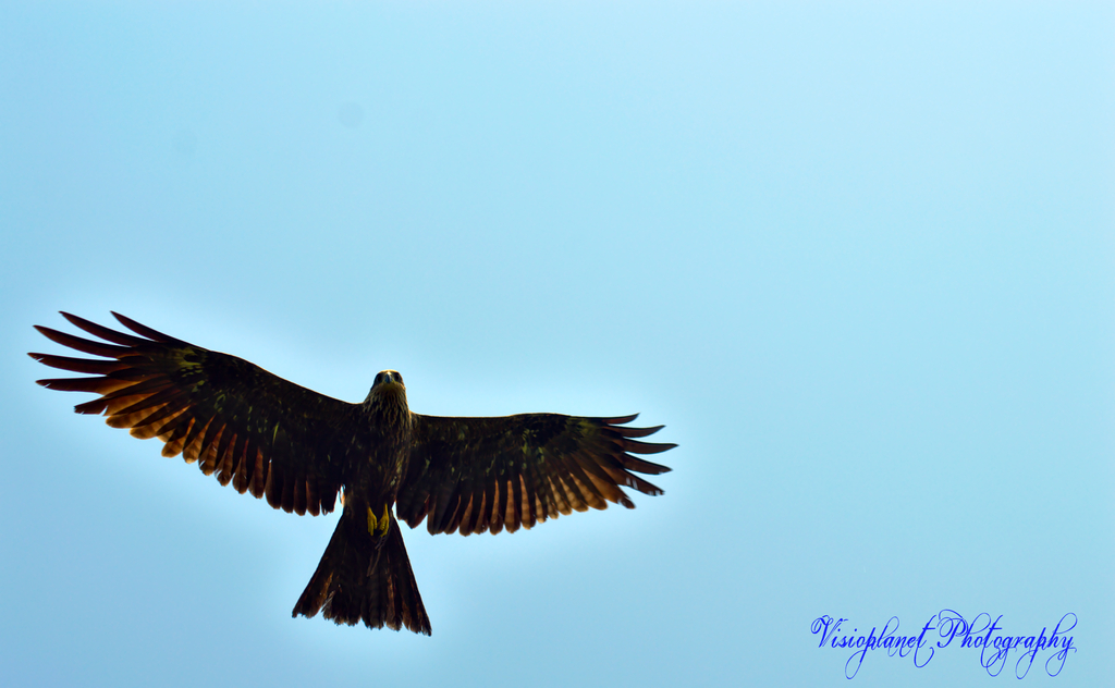 Soaring by Sudipto Sarkar on Visioplanet