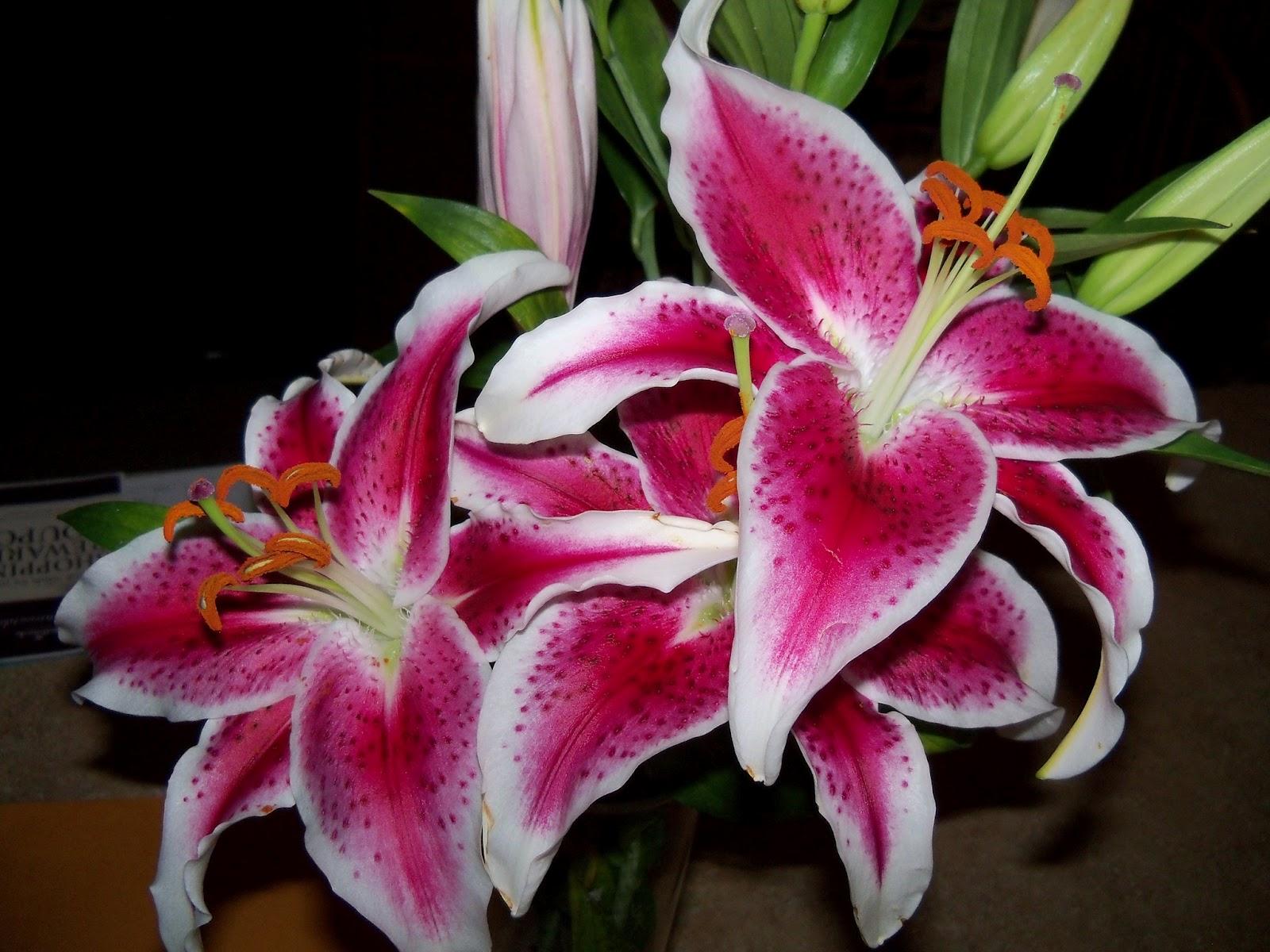 Bouquets - 101_0104.JPG