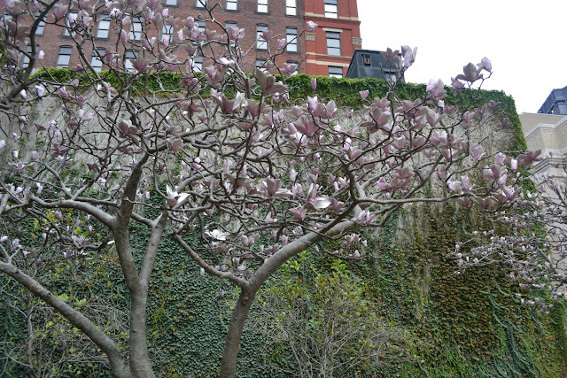 """Magnolias for Pittsburgh"", автор Tony Tasset"